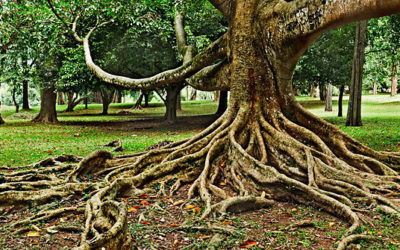 THE IMPORTANCE OF PUTTING DOWN ROOTS